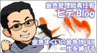 金魚管理総責任者ヒデのBlog